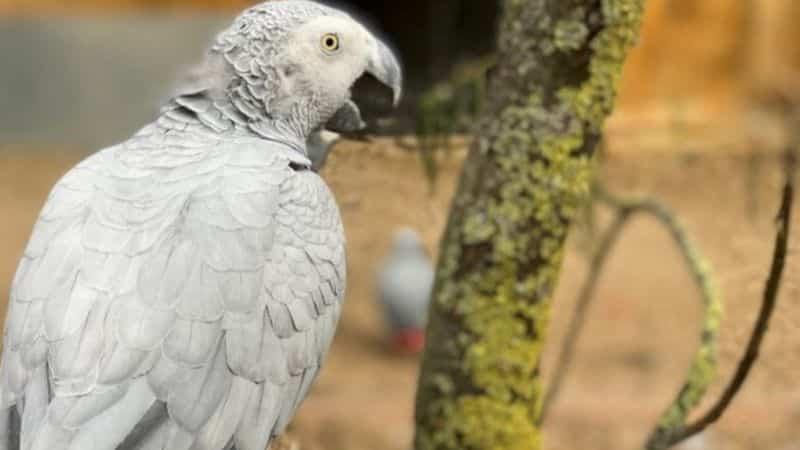 Cinci papagali au fost trimiși la izolare într-un parc zoologic pentru că înjurau vizitatorii