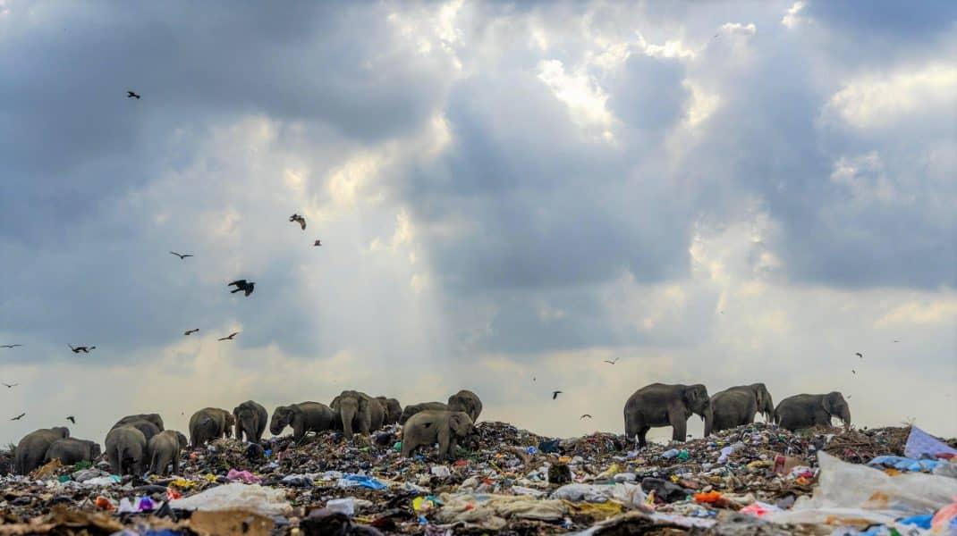 Imagine tulburătoare cu o turmă de elefanți care se hrănește din gunoaie. Fotografia a câștigat premiul întâi în cadrul unui concurs