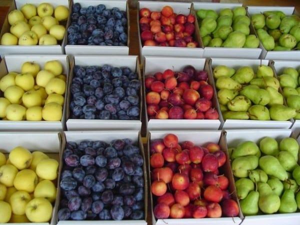 Producătorii de fructe de pe ambele maluri ale Nistrului, noi piețe de desfacere în UE ~ InfoPrut
