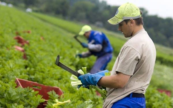 Agricultorii din Republica Moldova pot depune cereri pentru a primi motorină donată de România ~ InfoPrut