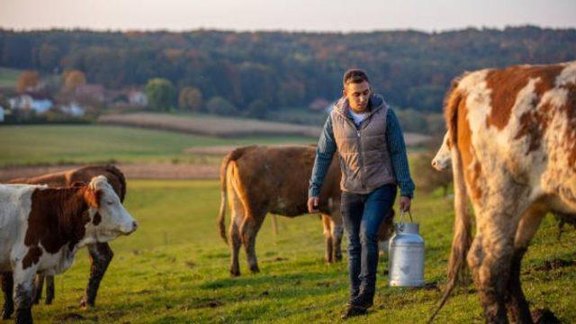 Ajutorul Covid bovine 2021 – la plată de astăzi! APIA: 140,37 lei/cap de animal și 541,87 lei/tona de lapte!