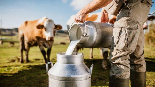 Preţ de 1,7 lei/litru pentru fermierii care livrează lapte la cea mai nouă fabrică din România!