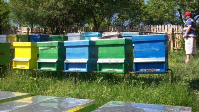 APIA: Banii transferați în conturile a 7.083 de apicultori și 14 asociații apicole!